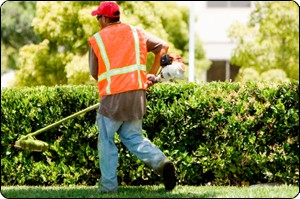 Lawn Care employee working in the yard