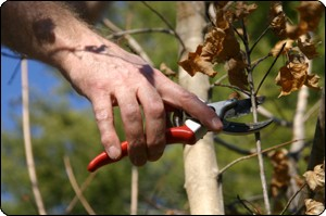 Tree Service Business software